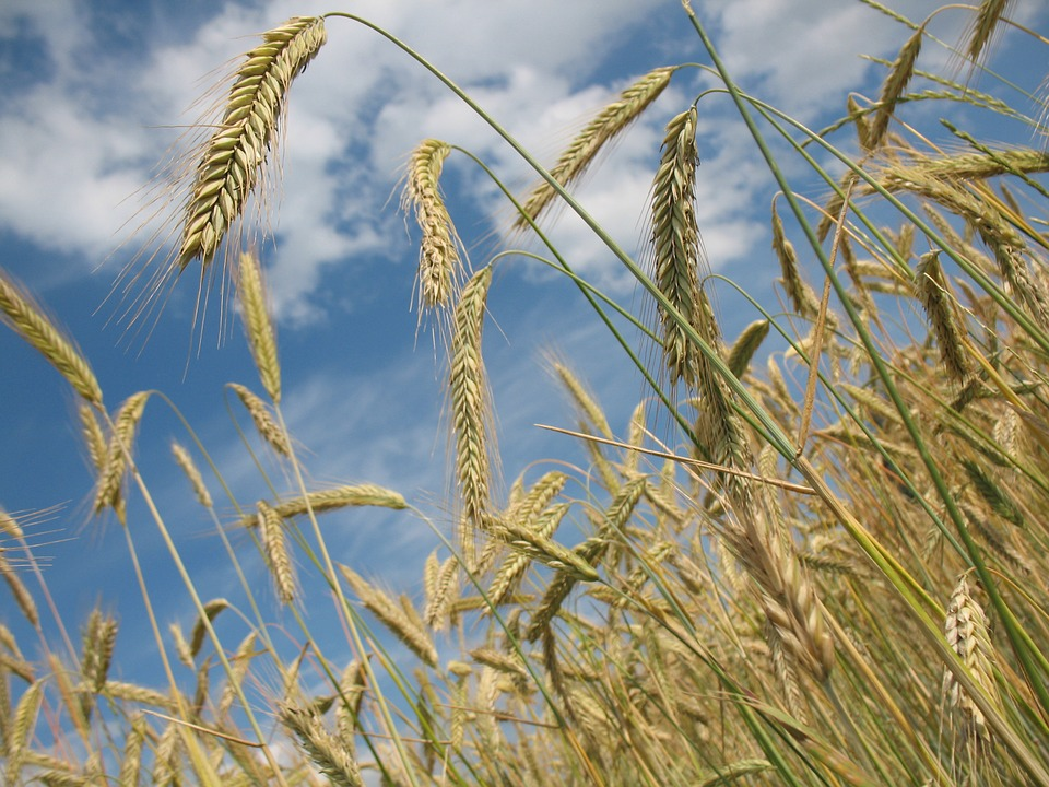 Indigo Agriculture opens European headquarters in Basel